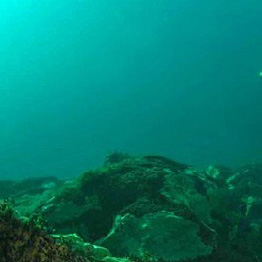 Выставку подводной виртуальной реальности Байкала откроют в Иркутске в 2022 году