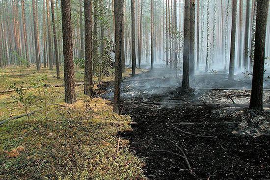 ВИркутской области ввоскресенье потушили два лесных пожара