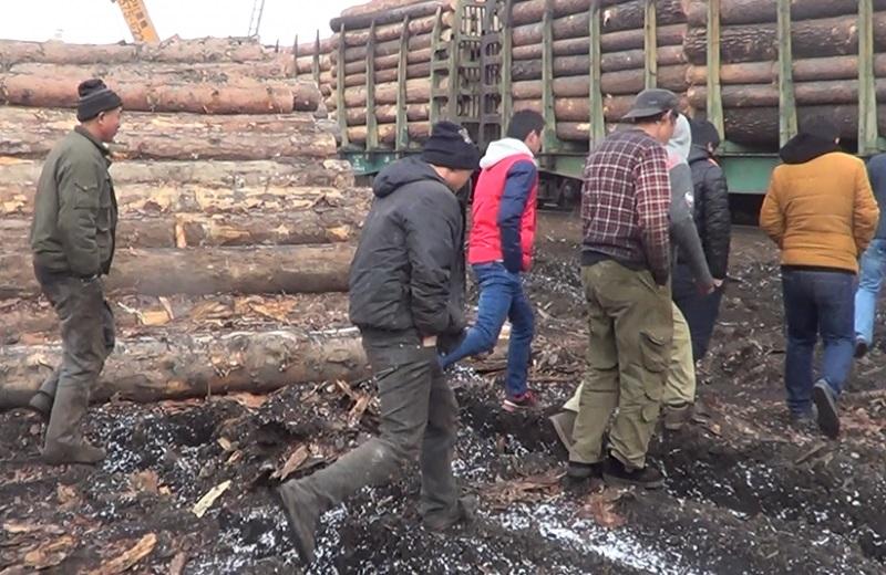 Полицейские задержали 30 незаконных мигрантов налесопилке вИркутске